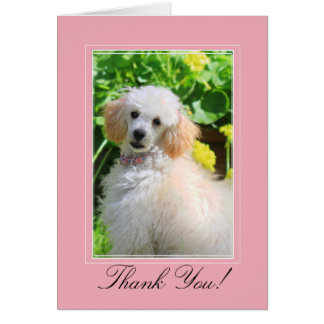 Thank You toy poodle greeting card