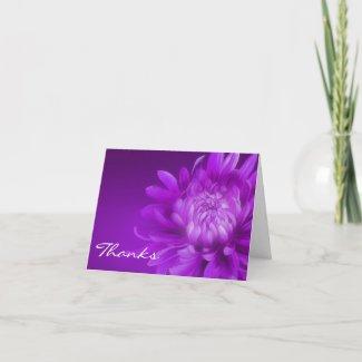 Thanks purple chrysanthemum