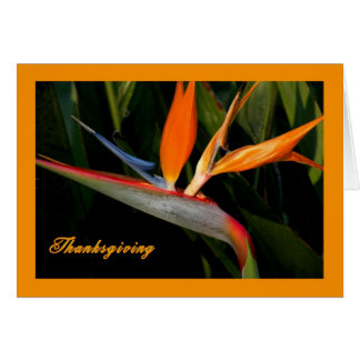 Thanksgiving Card with Bird of Paradise