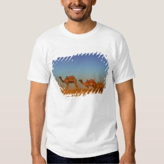 Thar desert, Rajasthan India. Camels along the Shirts