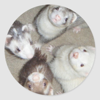 The 4 Musketeer Ferrets! Classic Round Sticker
