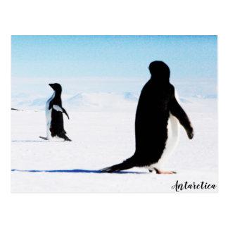The Adélie Penguin Dancer and Friend Postcard
