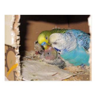 The Adoring Parents Postcard