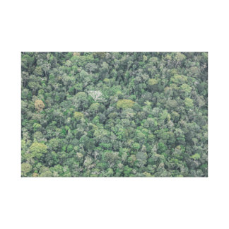 The Amazon Forest Canvas Print