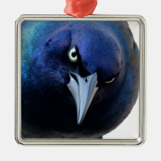The Angry Grackle Metal Ornament