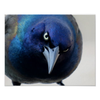The Angry Grackle Poster
