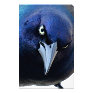 The Angry Grackle Stationery