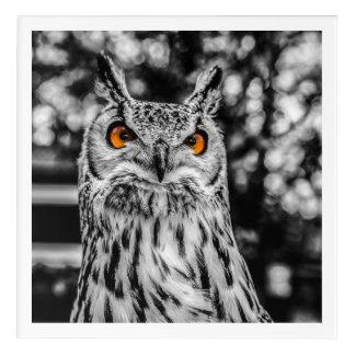 The Angry Owl Acrylic Wall Art