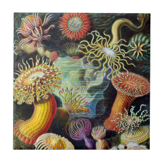 The Art of Nature by Ernst Haeckel Tiles