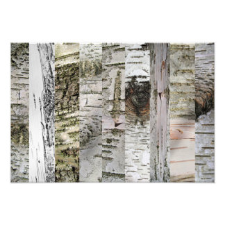 The Artful Birch Photo Print