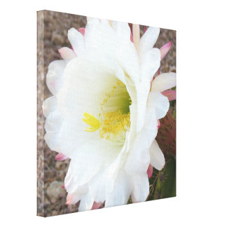 The Awesome Blossom Canvas Print