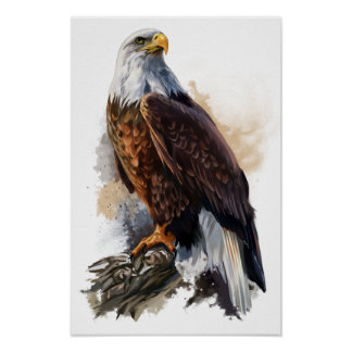 The bald eagle poster