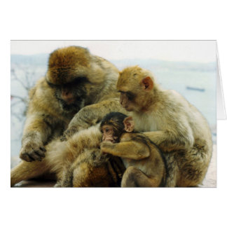 The Barbary Apes Card