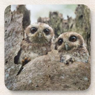 The Bare-legged Owl Or Cuban Screech Owl Beverage Coasters