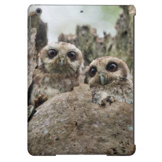 The Bare-legged Owl Or Cuban Screech Owl Cover For iPad Air