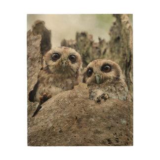 The Bare-legged Owl Or Cuban Screech Owl Wood Canvas