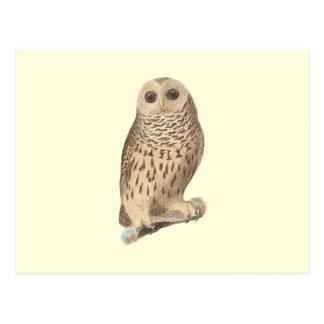 The Barred Owl(Ulula nebulosa) Post Card