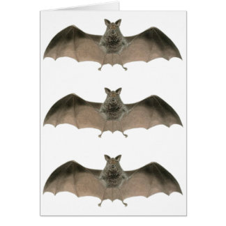 the bat card
