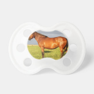 The Bay Mare Dummy