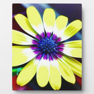 The Beauty of Yellow and Purple Plaque