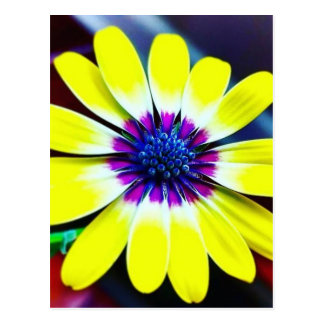 The Beauty of Yellow and Purple Postcard