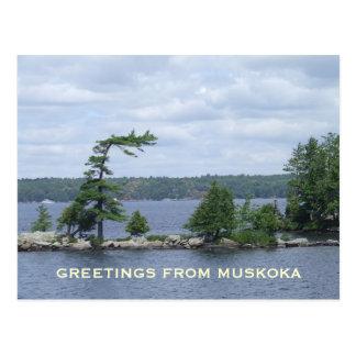 The Bent Tree, Muskoka, Ontario, Canada Postcard