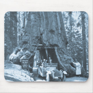 The Big Trees of Mariposa Grove Mouse Pads