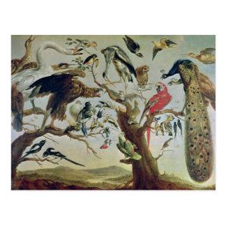 The Bird's Concert Postcard