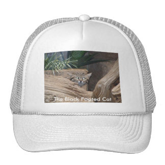 The Black Footed Cat Cap