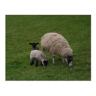 The Black Sheep Postcards