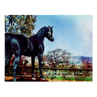 The Black Stallion Postcard
