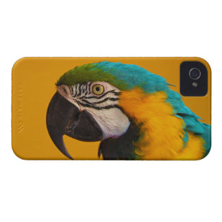 The Blue and Yellow Macaw Ara Ararauna Parrot Bird iPhone 4 Cases