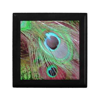The Blue Eye peacock flowing feather. Gift Box