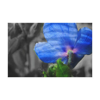 The blue poppy flower canvas print