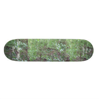 The Bob White Quail. 11 18.1 Cm Old School Skateboard Deck