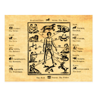 The Body, as governed by the Twelve Constellations Postcard