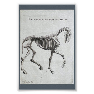 The bones of a horse poster