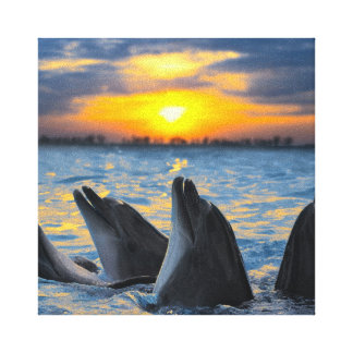 The bottle-nosed dolphins in sunset light canvas print