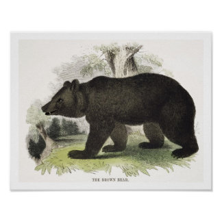 The Brown Bear, educational illustration pub. by t Poster