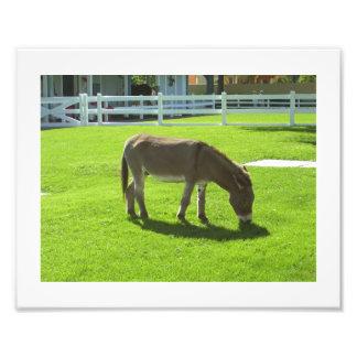 The Budweiser Donkey Photo