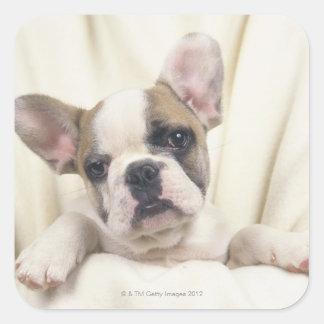 The Bulldog, often called the English Bulldog, 2 Square Stickers