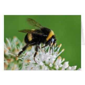 The Bumble Bee Card