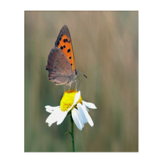 the butterfly image acrylic wall art