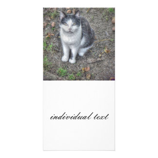 the cat customized photo card