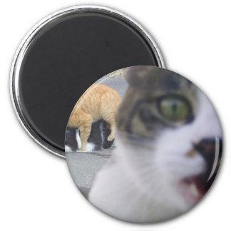 The cats little secret 6 cm round magnet