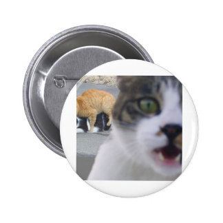 The cats little secret button