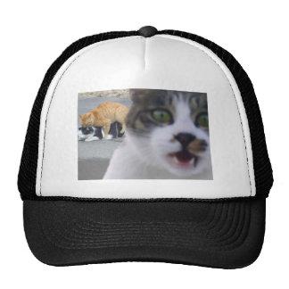 The cats little secret mesh hat