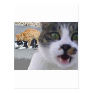 The cats little secret postcard