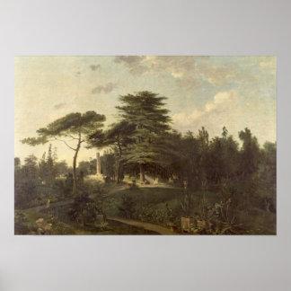 The Cedar of Lebanon in the Jardin des Plantes Poster