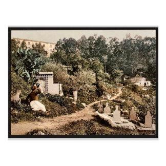 The cemetery, Algiers, Algeria vintage Photochrom Postcard